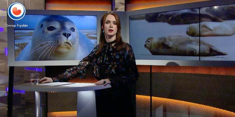 Video | Mogelijke zeehondenopvang op Terschelling is onzeker