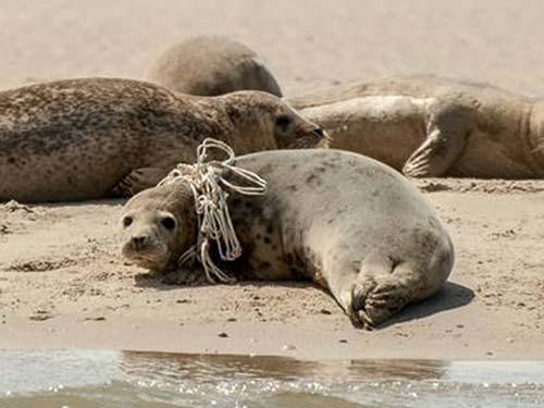 zeehondenopvang-terschelling-RTZ-team-hessel-zeehond-gespot2