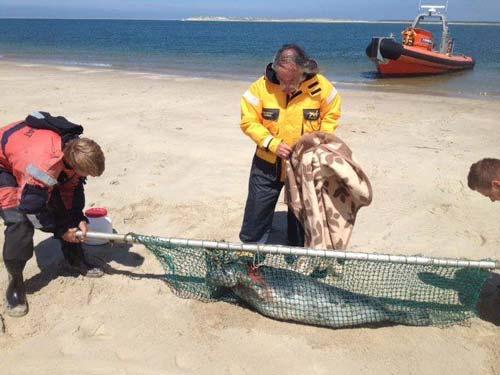 zeehondenopvang-terschelling-RTZ-team-hessel2